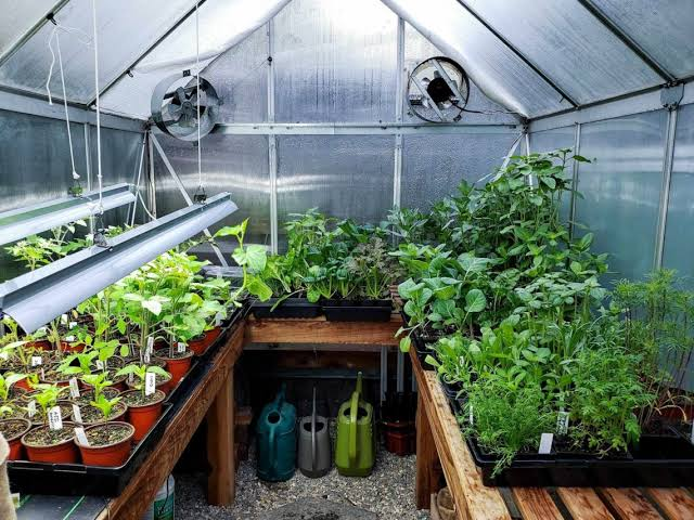 A Hobby Greenhouse can Get You Growing