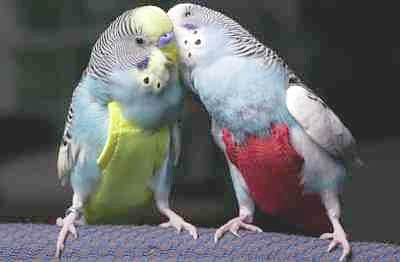 Budgies Are Awesome Flight Suits Part One