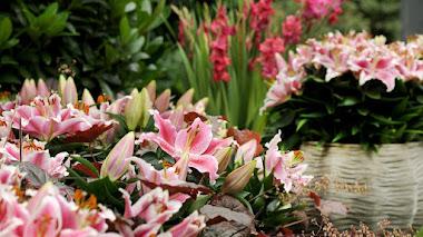 5 plantas bulbosas con flores fragantes en verano
