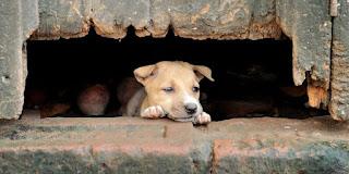 El problema de los perros callejeros en México