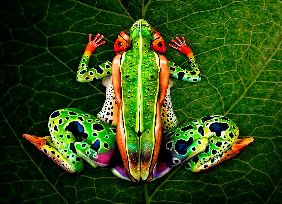 Welcome to Boma Peters Blog: WHAT DO YOU SEE?A FROG OR