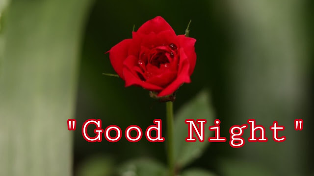 Good Night Flowers Photo