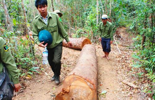 Lạ lùng ở Gia Lai: Vào rừng, ra khỏi rừng kiểm lâm đều nổ súng