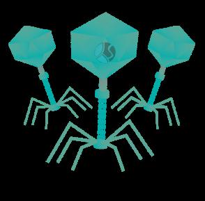 Virus sanggup hidup di dalam dan di luar sel PERKEMBANGBIAKAN VIRUS : DAUR LITIK DAN LISOGENIK