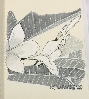 ink drawing of rain drops on frangipani leaves and flowers, artist Linzé Brandon