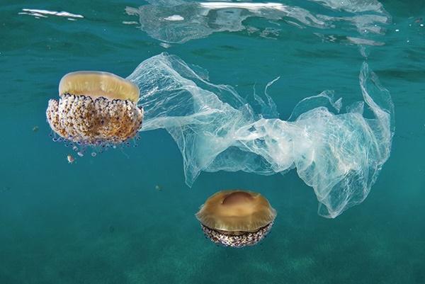 Plastik Memusnahkan Laut dan Kehidupan