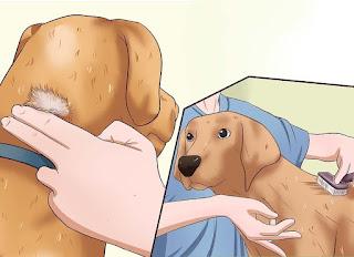 犬のかゆみを伴う皮膚の問題を診断して治療する方法