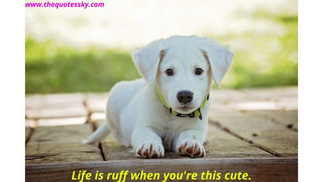 99+ Quotes About Dog Unconditional Love Also Captions