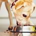 Προσθέστε λιπαρά οξέα στην διατροφή του σκύλου...