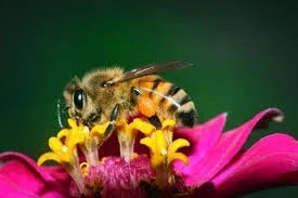 bee sting lower back pain