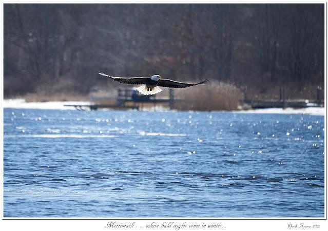 Merrimack: ... where bald eagles come in winter...
