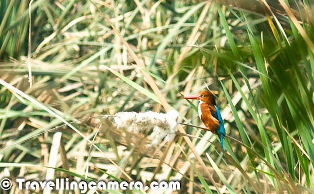 Bird of the Month, Birding, Bird Photography, Kingfisher, Bird Watching