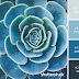 Những kết hợp màu sắc đầy cảm hứng sưu tầm từ Shutterstock