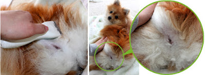 como tosar um cão paralitico