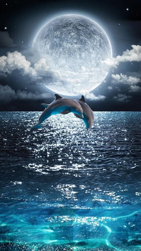 Cá Heo Dưới Ánh Trăng