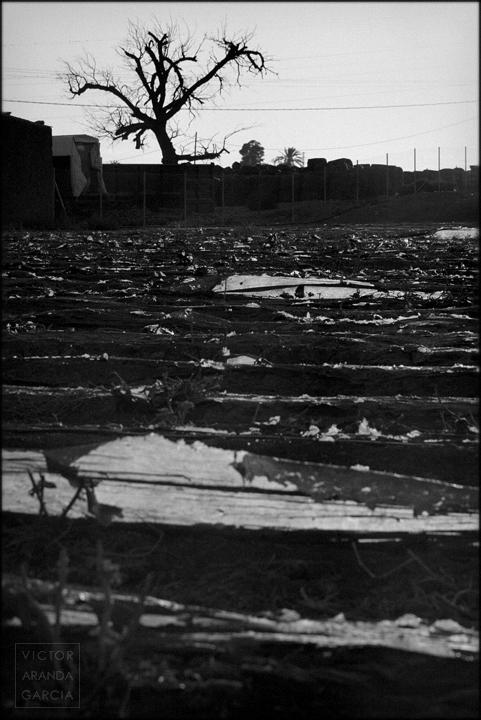 fotografia,campo,cultivo,murcia,fuente_alamo,plastico,invernadero