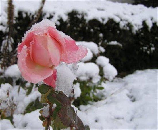 صور عن التلج Telj اجمل مناظر الثلوج في العالم