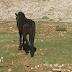 Παστούρωμα  :Κακοποίηση  αλόγου σε χωριό της Παραμυθιάς ...