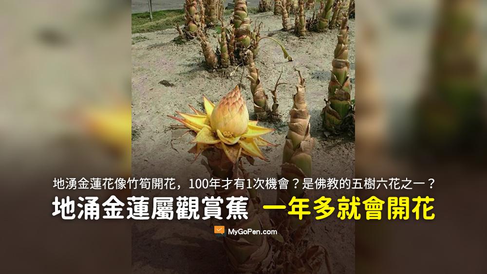 竹筍開花 1OO年才有1次機會 地湧金蓮花 佛教 五樹 六花之一