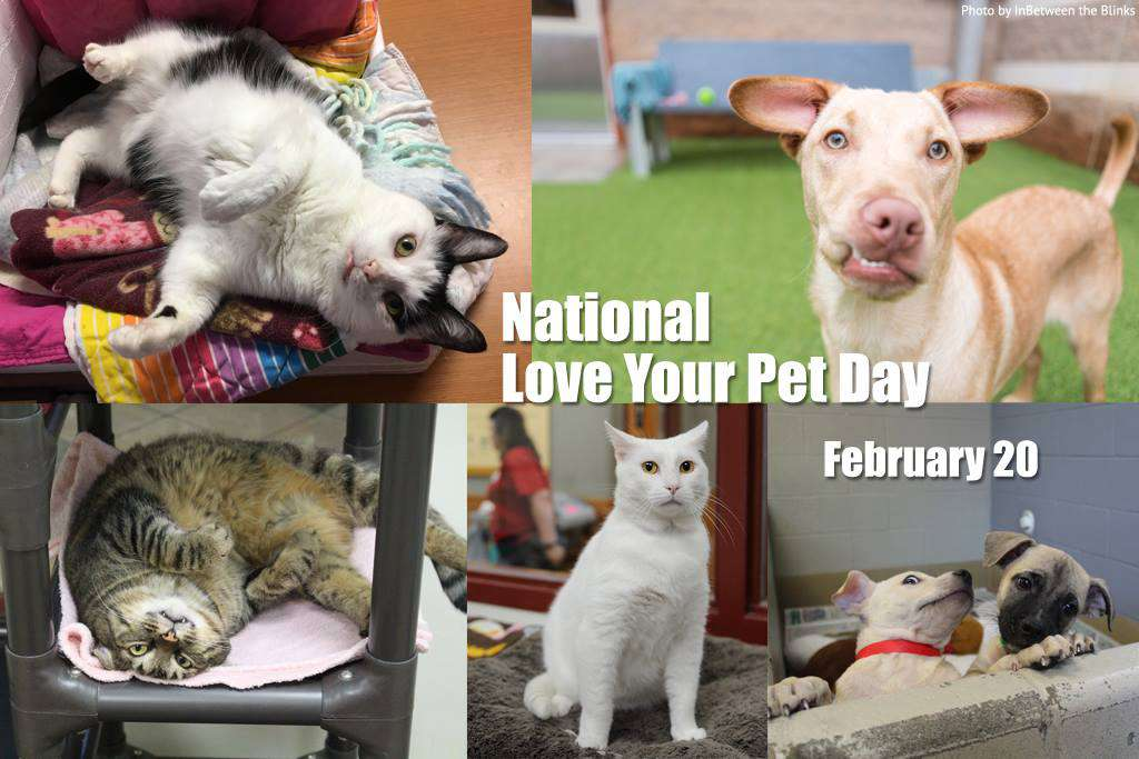 National Love Your Pet Day Wishes For Facebook