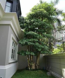 Konsep taman - garden style