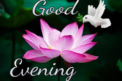 Happy good evening images with flowers
