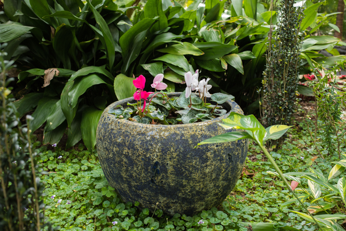 water bowl with flowers