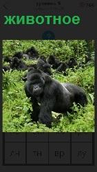 обезьяна в лесу как животное