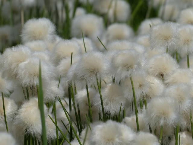 la filière du coton bio - ArteCita ECO Fashion