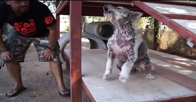 Dog performs happiest dance once he realizes he's being adopted