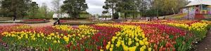 Berkunjung Ke Taman Bunga Floriade Canberra - Australia