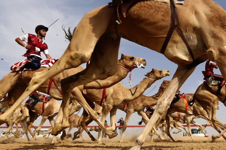 Corrida de camelos nos Emirados Árabes Unidos
