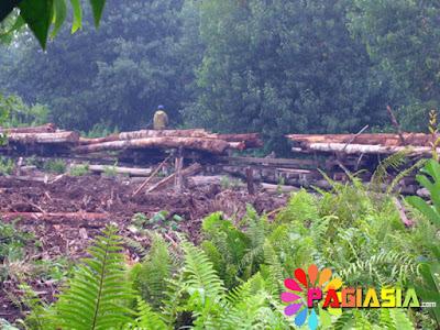 MA Menghukum Penebang Hutan Sebesar Rp 16 Triliun Inilah Alasannya Berdasarkan Precautionary Principle