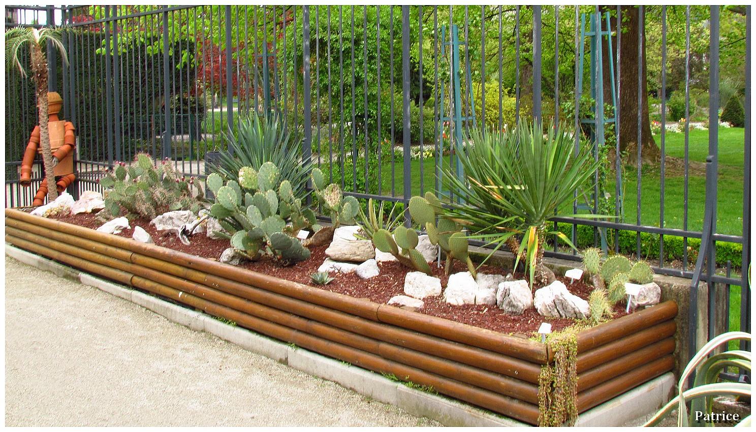 massif plante grasse ef79 jornalagora. Black Bedroom Furniture Sets. Home Design Ideas