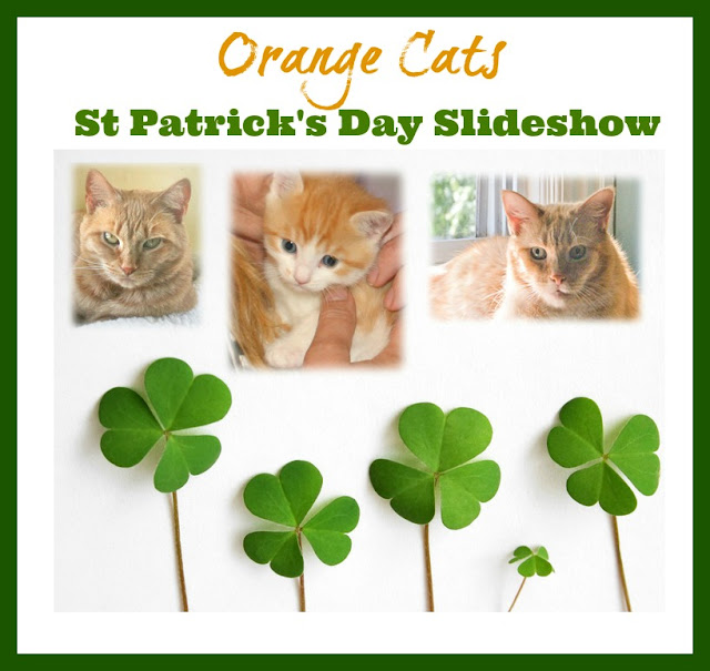 whew we finally finished it little did we know that when we put out a call for orange cats on our facebook page that wed end up with 105 orange lovelies