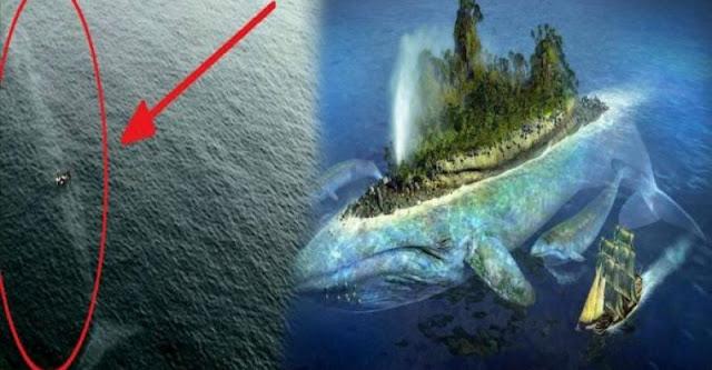 Bukan Sekedar Kisah, Fakta Ikan Paus yang Menelan Nabi Yunus Masih Hidup?