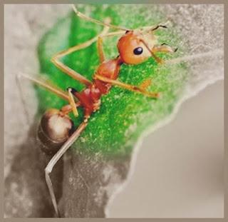 sfaturi turcuri scapa de furnici natural acasa