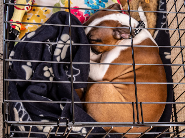 Photo of Ruby fast asleep in her cage