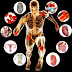 What are the five levels of body composition   organization