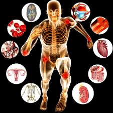 Human body composition can be studied at the atomic, molecular, cellular, tissue, and whole body level