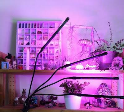 plants, airplants,