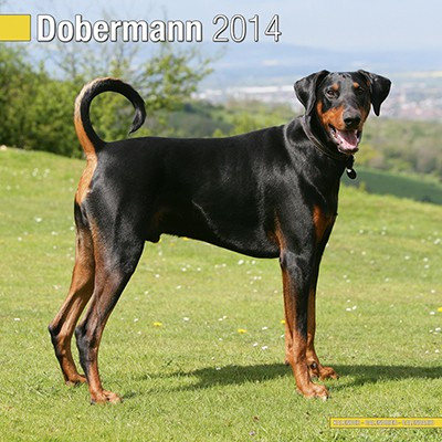 how to cut tail of doberman