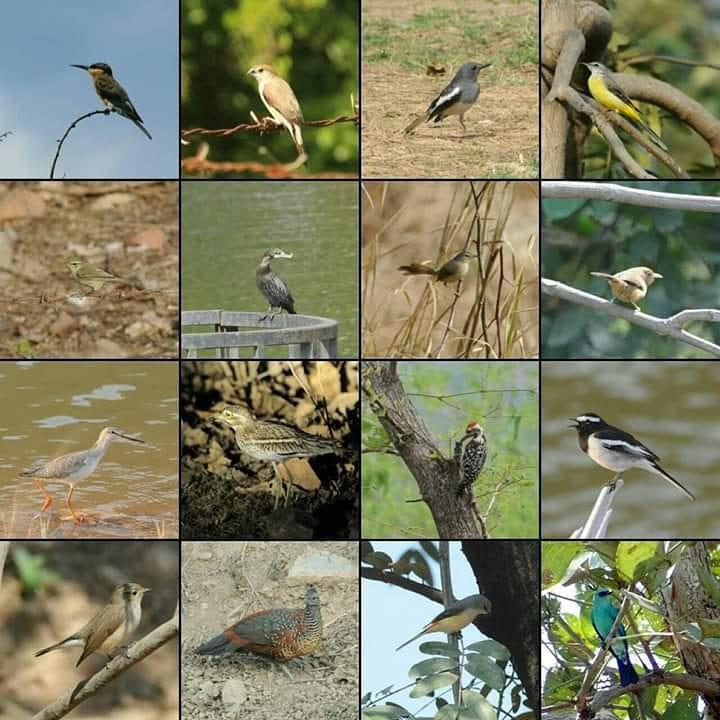 Kharmor Bird sanctuary ratlam