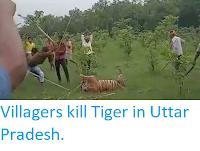 https://sciencythoughts.blogspot.com/2019/07/villagers-kill-tiger-in-uttar-pradesh.html