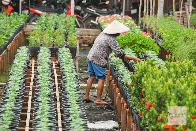 Người nông dân đang tưới tắm vườn hoa