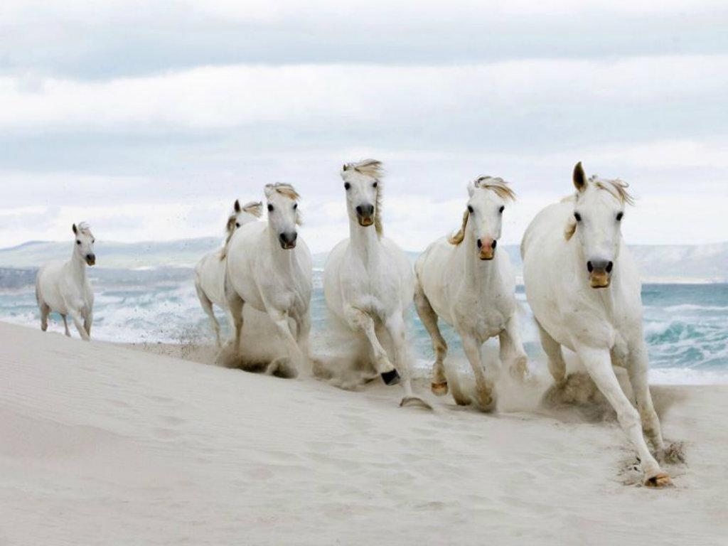 Fantastic   Wallpaper Horse Ultra Hd - 7-White-Horses-HD-Wallpaper  Trends_6610082.jpg