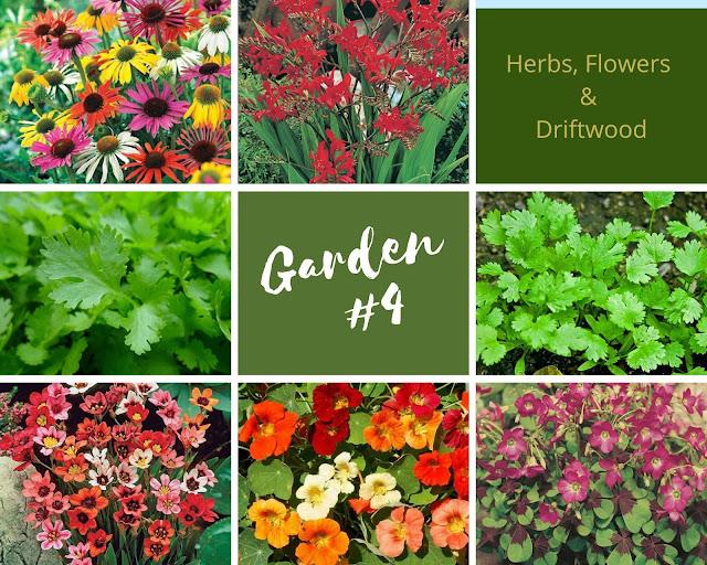 Rock-n-Zen Garden Plot #4 plants identification.