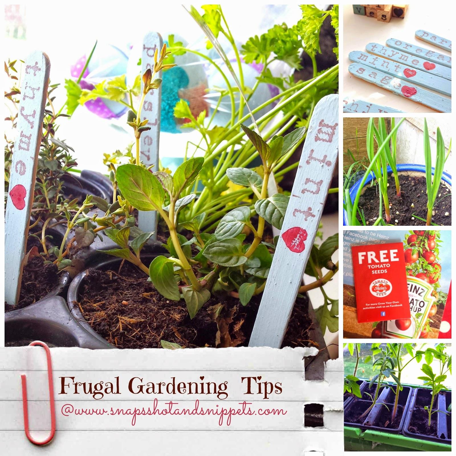 Frugal Gardening