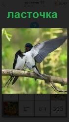 460 слов 4 на ветке сидит ласточка расправив свои крылья 19 уровень