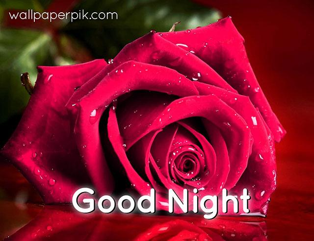 rose flower good night pics images